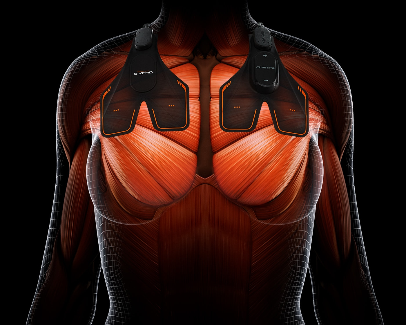 Large Pectoral Muscle A muscle that lifts the female bust and prevents it from dropping. Muscles that create a silhouette of a man's strong chest.